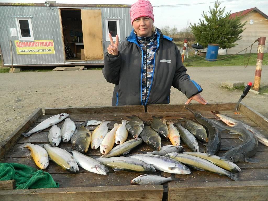 Обзор платной рыбалки в срк стрелецкий ручей (михайловская слобода) — цены, условия и услуги | lovitut.ru (рыбалка и бильярд) | яндекс дзен