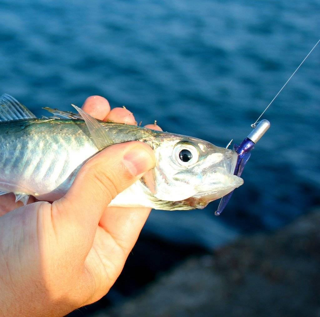 Рыбалка в витязево (на лимане с берега): лучшие места для ловли, какая рыба водится