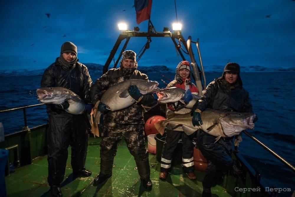 Баренцево море - рыбная сокровищница россии