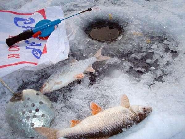 Как ловить рыбу в глухозимье — места, снасти и приманки