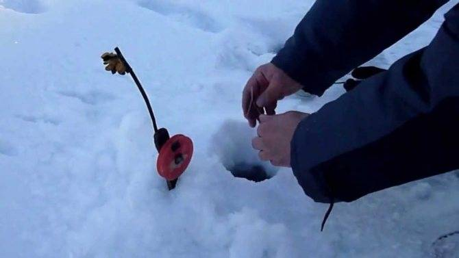 Как ловить налима зимой: где клюет ночью на жерлицы и стукалку