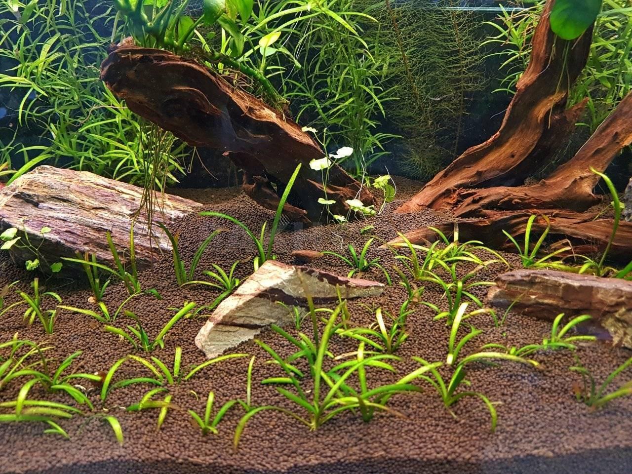 Почвы должно быть в достатке! сколько грунта нужно в аквариум?