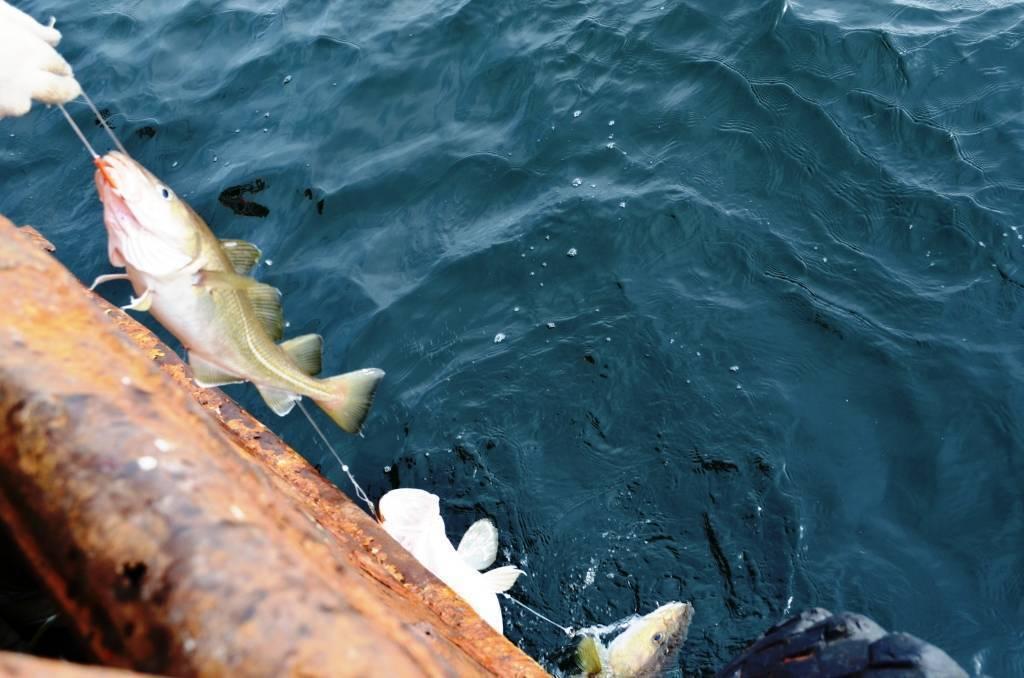 Особенности ловли камбалы с берега – рыбалке.нет
