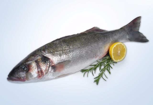 Морской волк, или сибас: описание рыбы, ловля, разведение