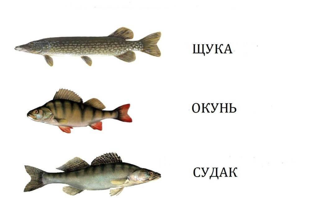 Календарь рыболова на 2020 год
