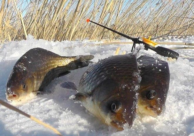 Лещ по первому льду – тонкости ловли и меры безопасности