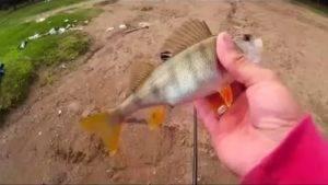 Без труда не вытащить и рыбки из пруда. а как рыбачить еще и без удочки?