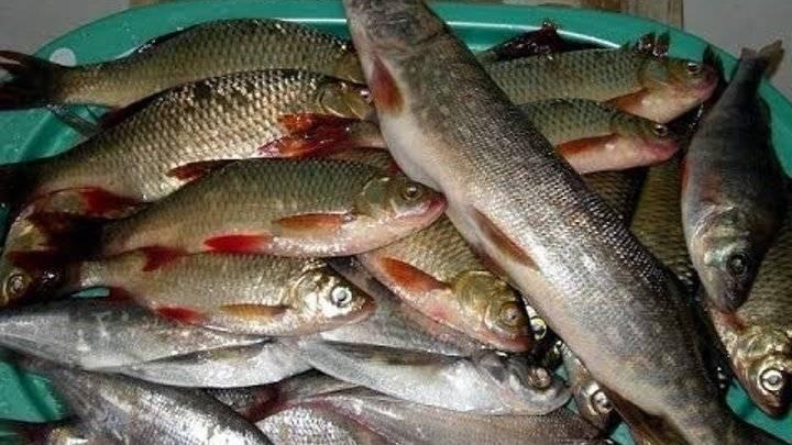 Все о рыбалке в коломне