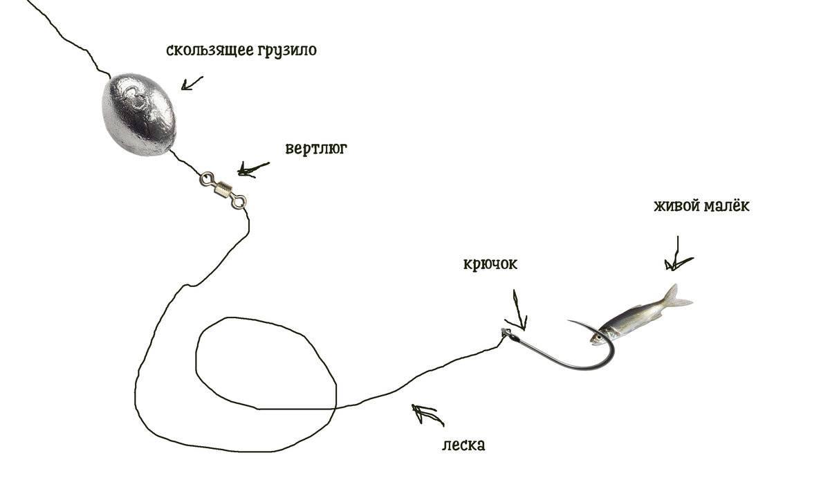 Ловля судака на живца: (снасти и эффективные способы ловли)