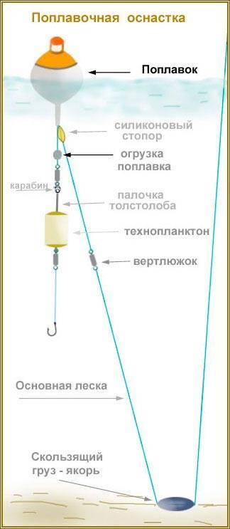 Толстолобик - описание, фото, снасти и способи ловли толстолобика