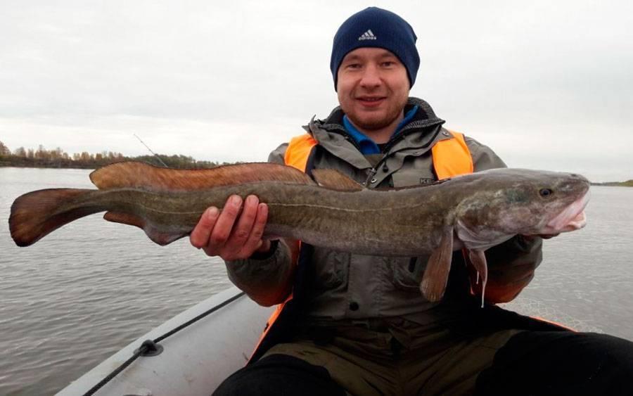 Рыбалка на оби: какая рыба водится, популярные виды для ловли