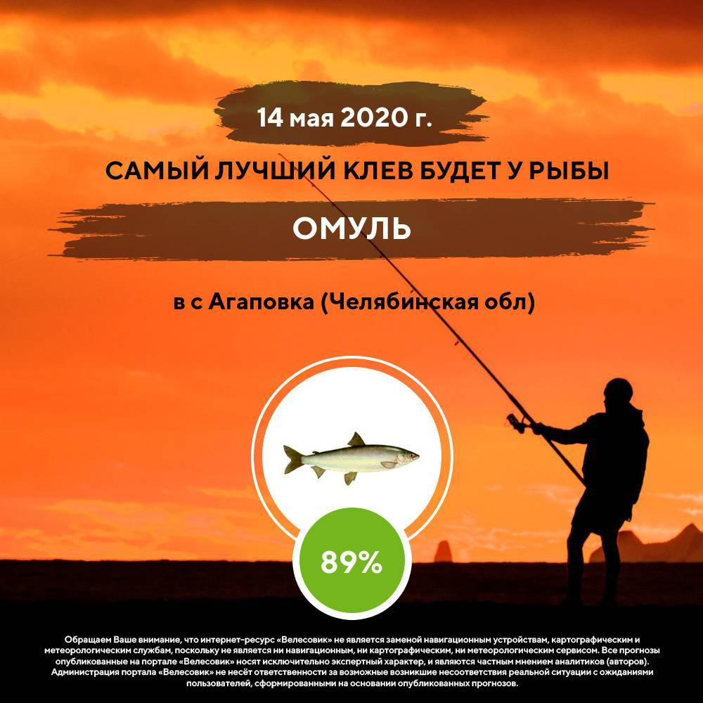 Охотничий и рыболовный туризм: что это такое,виды и направления   туризм и путешествия