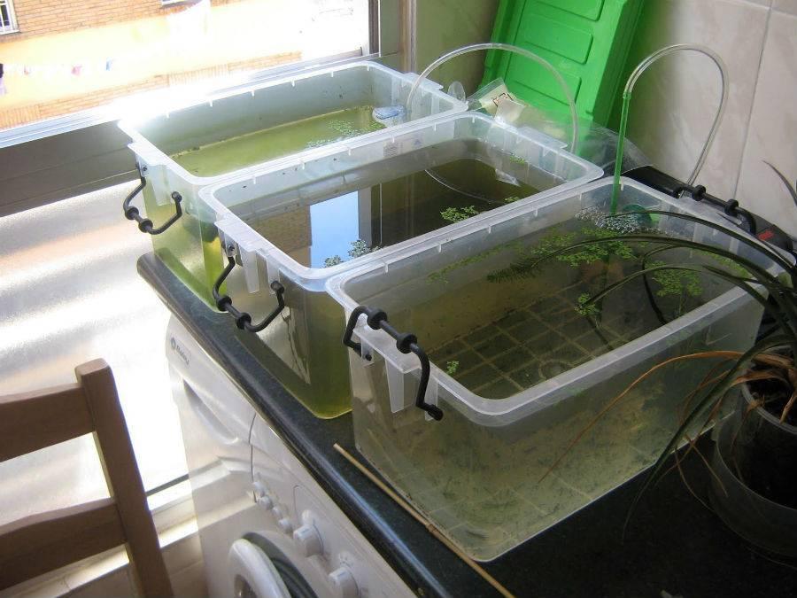 Как самостоятельно разводить живой корм для аквариумных рыбок