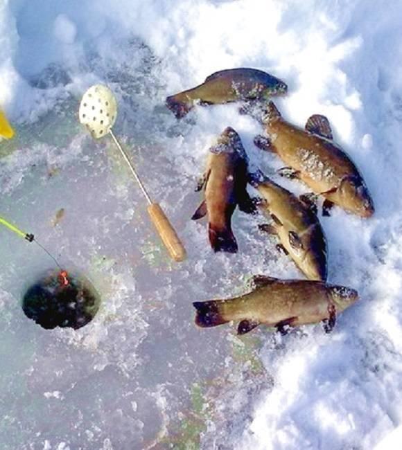 Рыбалка на сахалине: рыболовные туры и морская рыбалка, ловля палтуса, корюшки и другой рыбы на юге сахалина