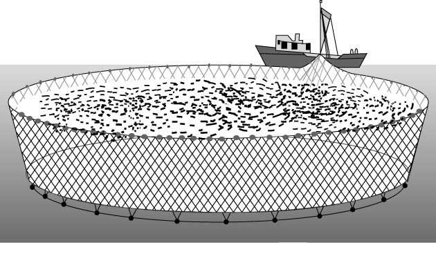 Оснастка при ловле щуки на поплавок с живцом: как произвести монтаж