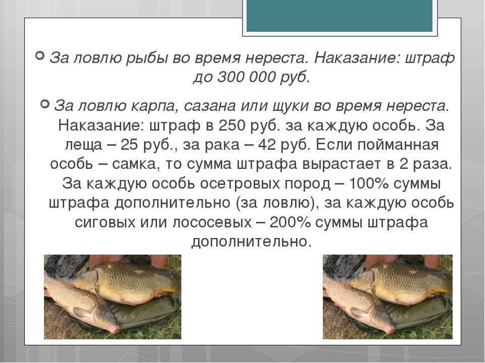 Подъезд к реке ближе чем на 200 метров: ответ рыбного инспектора
