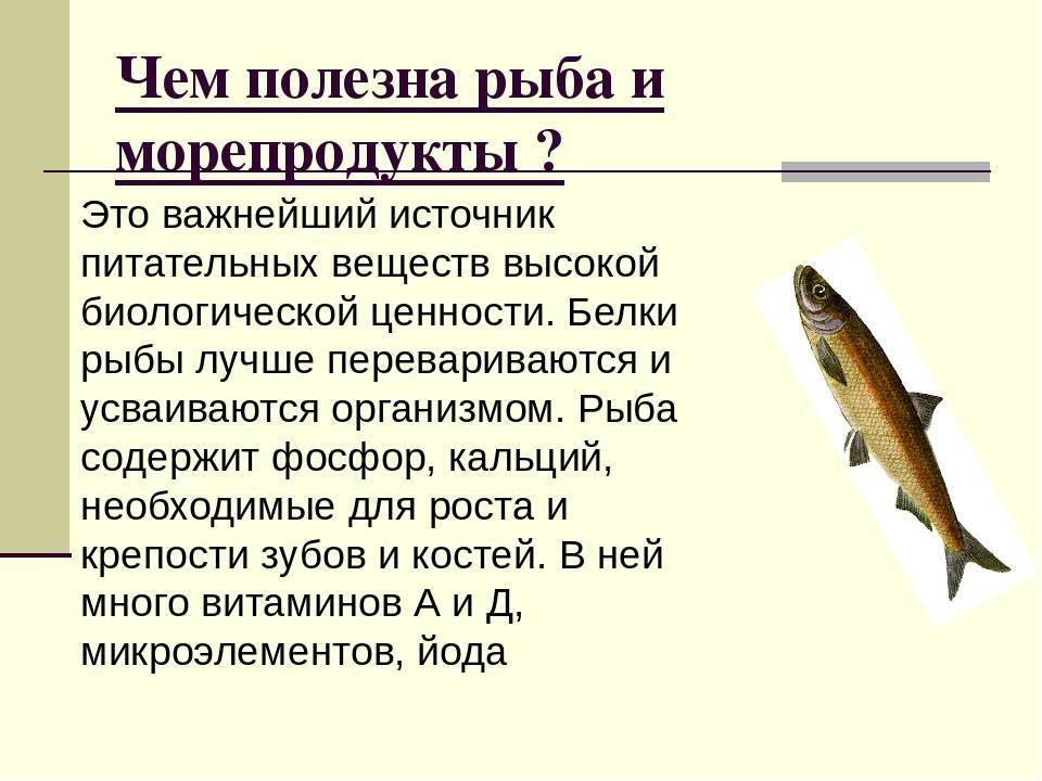 16 полезных свойств наваги?, что за рыба, польза и вред для здоровья