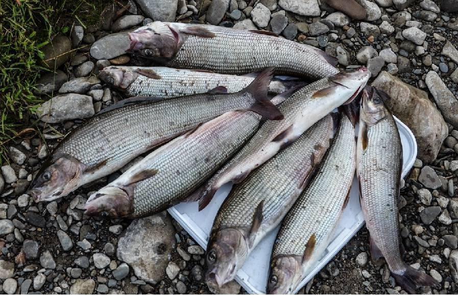 5 мест для зимней рыбалки в архангельске и окрестностях