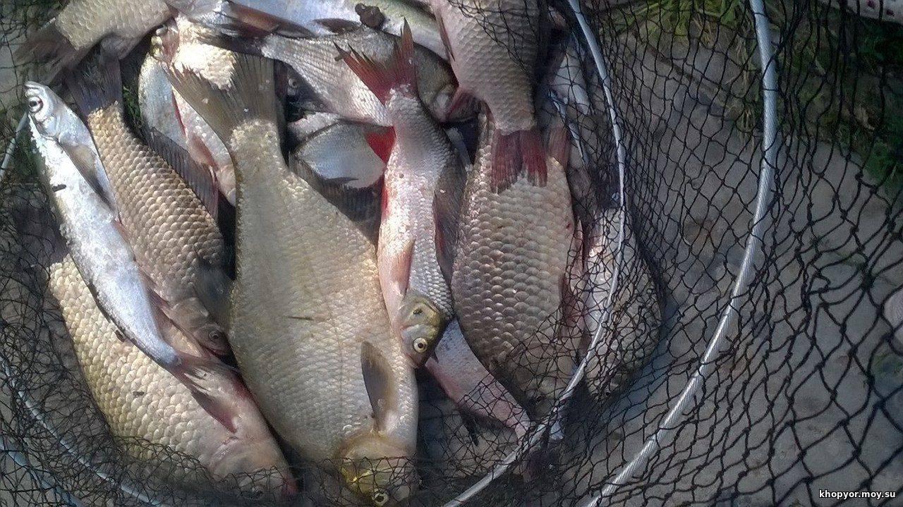 Рыбалка в воронеже и воронежской области