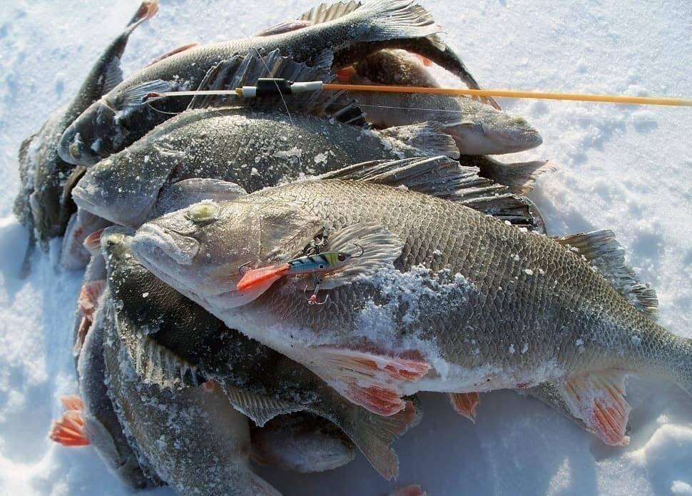 Особенности рыбалки на сахалине