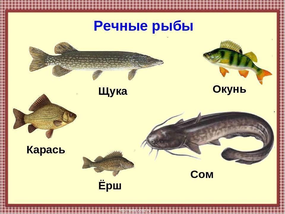 Список рыб россии с характеристиками, фото и подробным описанием