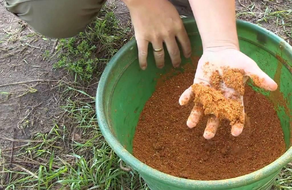 Каша для карпа: рецепты для ловли на пружину, кормушку, приготовление в домашних условиях