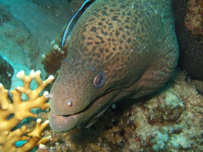 Самые опасные рыбы в мире – список, чем опасны, названия, где водятся, фото и видео  - «как и почему»
