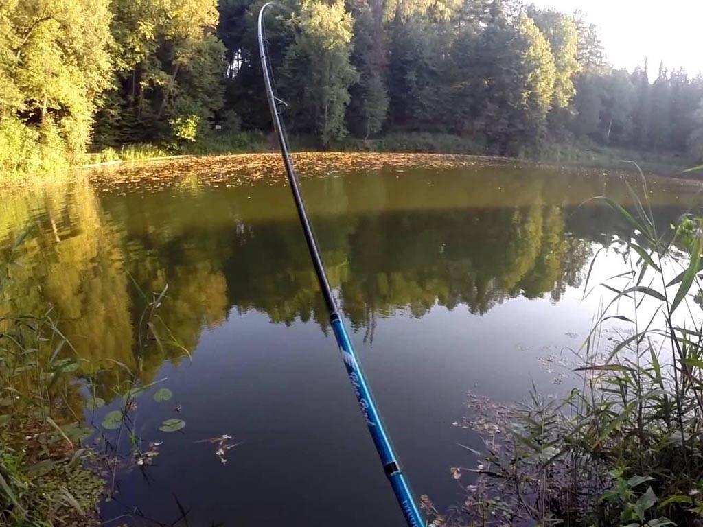 Рыбалка в дмитровском районе московской области, особенности ловли на реке сестра, в поселке «рыбное»