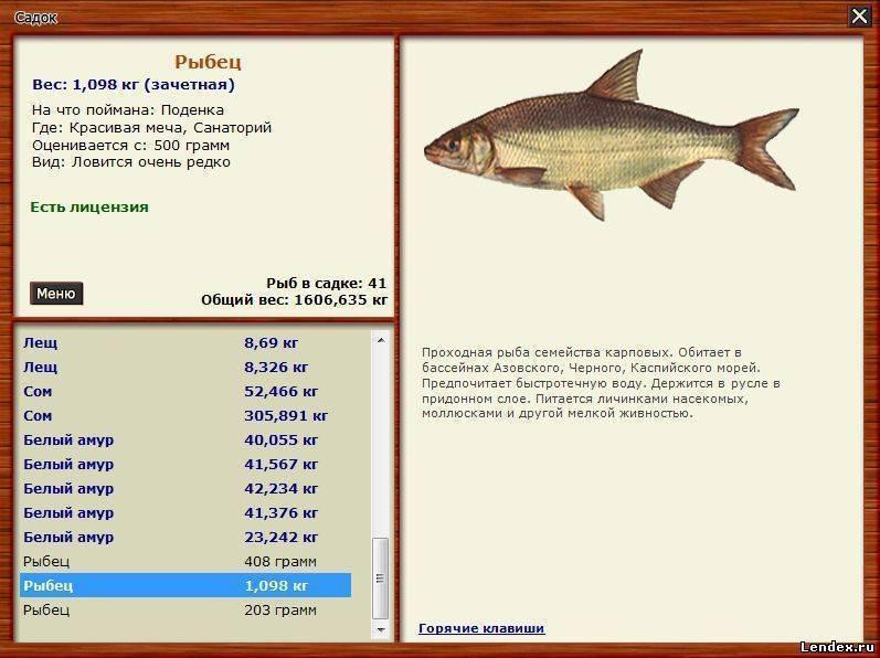 Рыба вьюн — образ жизни, поведение и способы любительской ловли