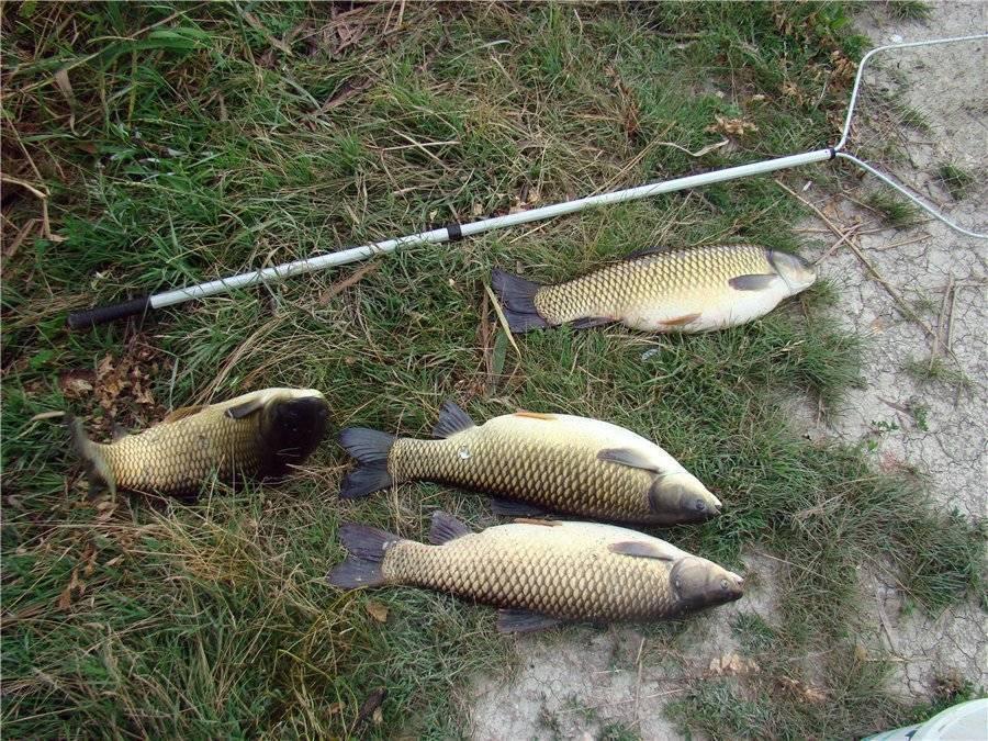 Рыбалка в кавказских минеральных водах. рыбалка в ставропольском крае — куда поехать, обзор платных и бесплатных водоемов