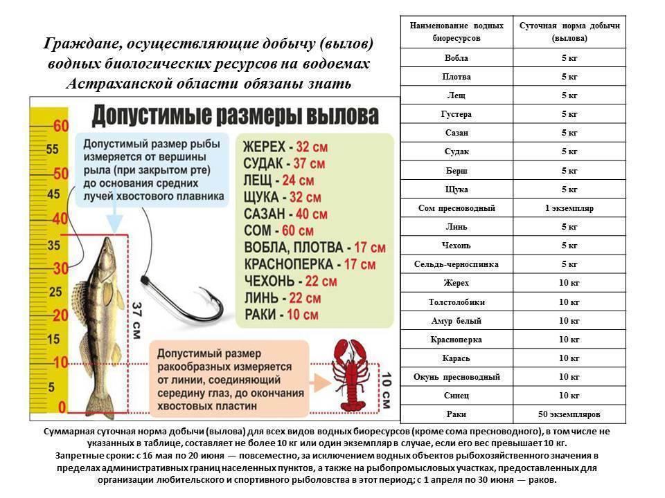 Минимально разрешенные к вылову размеры рыбы в азово-черноморском рыбохозяйственном бассейне, сохрани в закладки