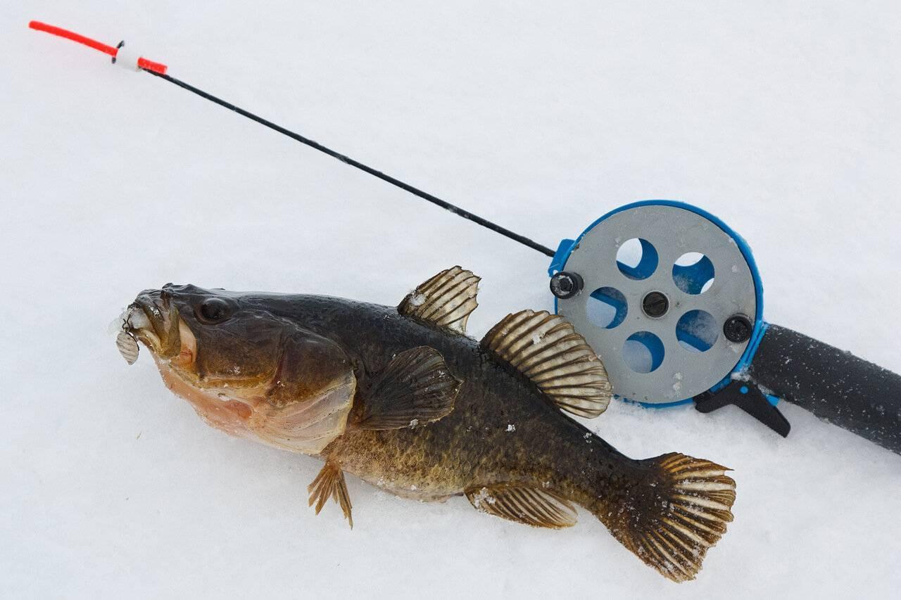 Что это за рыба ротан и как ее ловить?