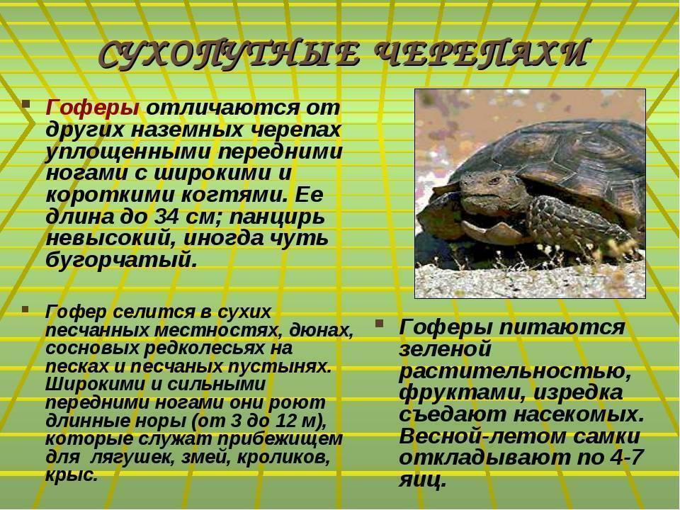 Сколько раз в день нужно кормить сухопутную черепаху