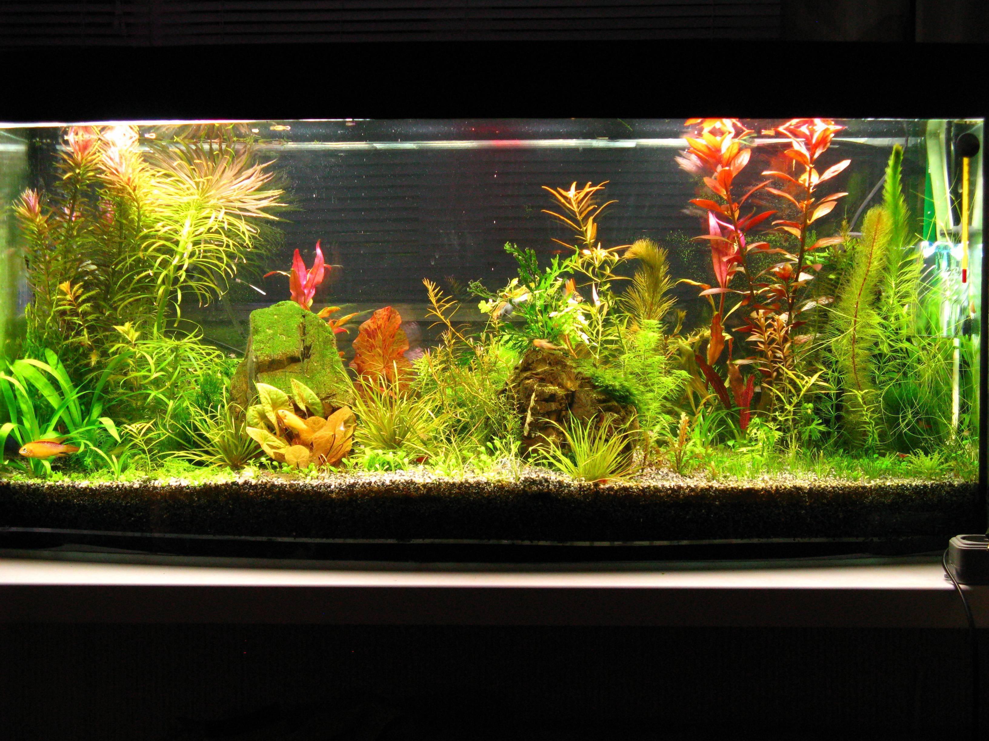 Аквариум с растениями: особенности и правила содержания травника
