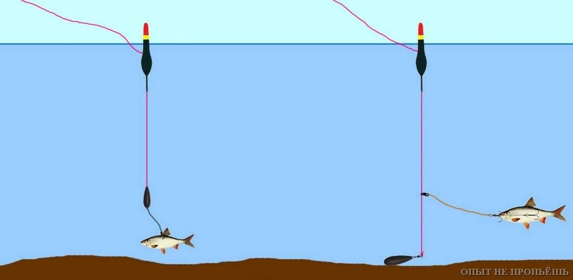 В какое время лучше ловить щуку: утром, днём, вечером или ночью, почему не клюёт, приметы