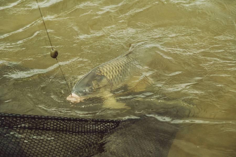 Ловля карпа: как правильно ловить, в какую погоду лучше клюет, особенности рыбалки