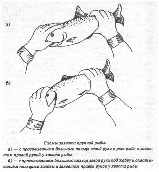 Поймать большую рыбу. медитация, осознанность, творчество  - дэвид линч (2006)