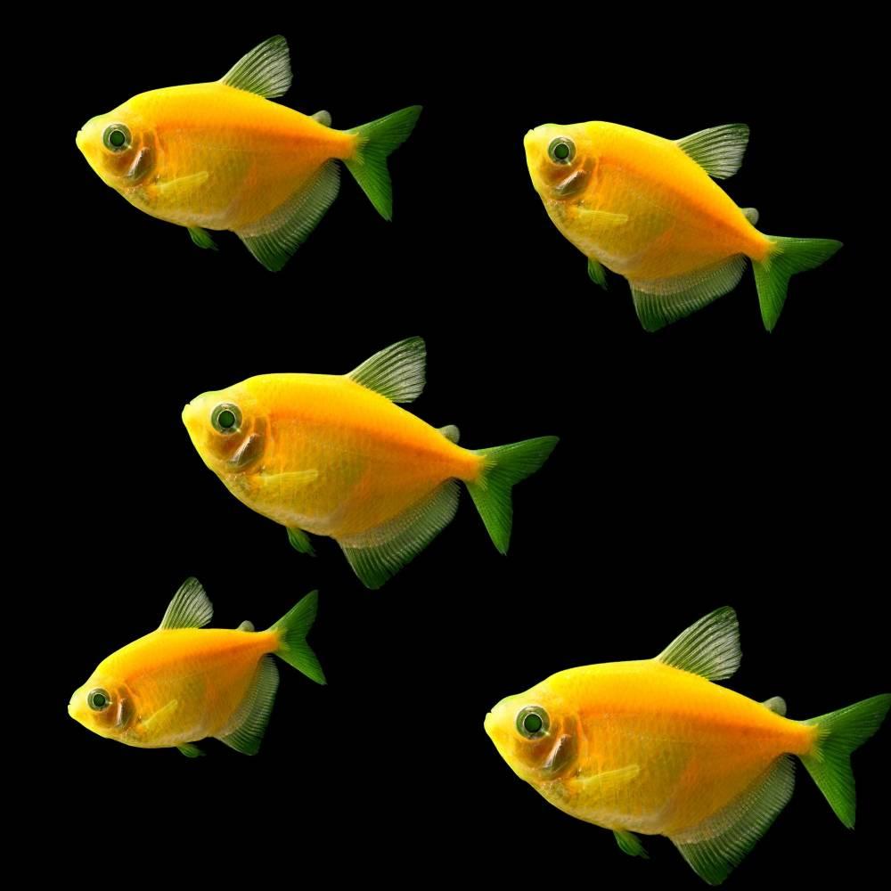 Список самых популярных аквариумных растений