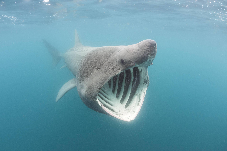 Самые большие рыбы в мире – список, размеры, названия, где водятся, фото и видео  - «как и почему»