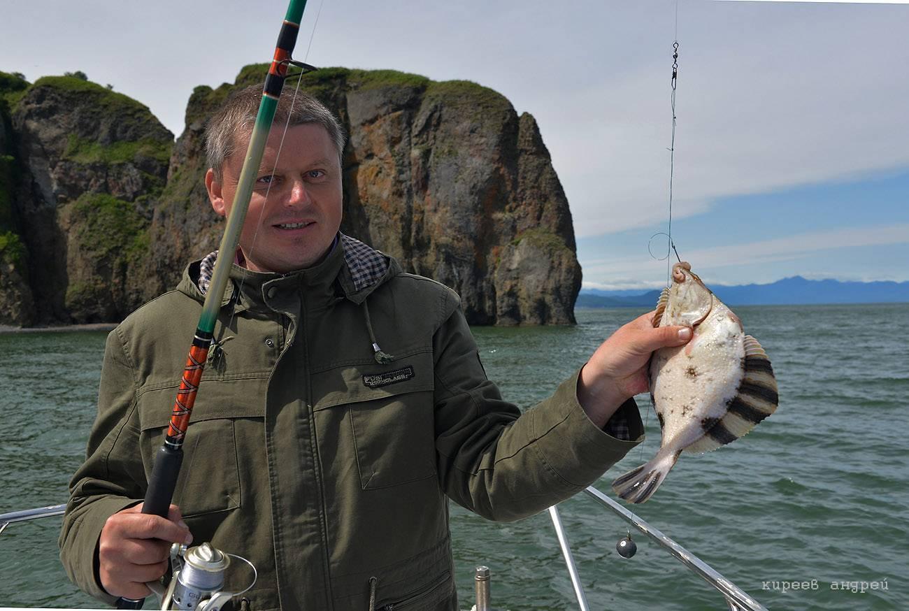 Рыба камбала — описание видов, где обитает