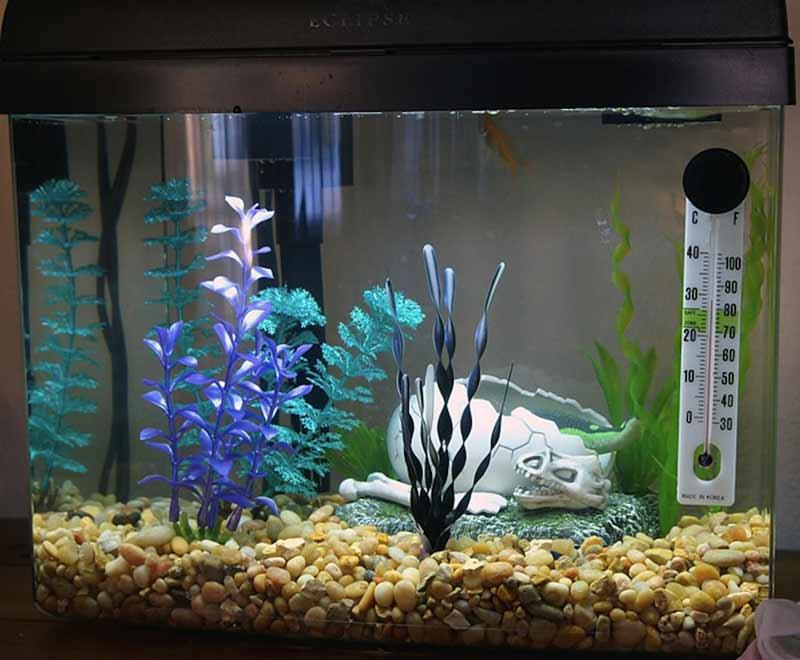 Какой должна быть температура в аквариуме для рыб?