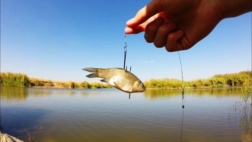 Рыбалка на сома: какие наживки привлекают рыбу больше всего, как ловить сома весной, летом и осенью