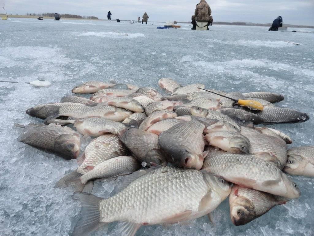 Охота и рыбалка в коми