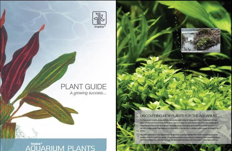 Плавающие аквариумные растения (13 фото): какие растения могут плавать в аквариуме на поверхности воды? обзор видов с названиями и описаниями