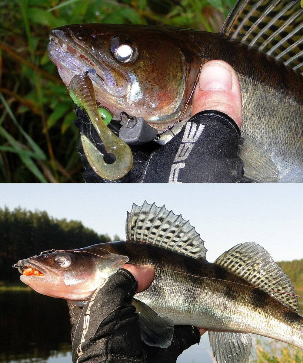 Судак: рыба судак фото и описание, нерест, способы ловли, образ жизни, приманки, прикормки, блюда из судака