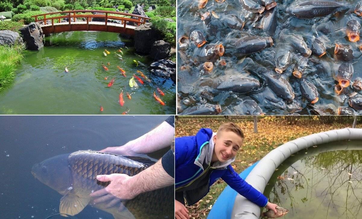 Разведение и выращивание рыбы в пруду: советы по кормлению и уходу