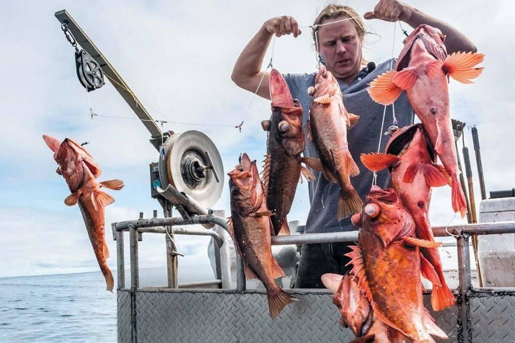 Морской окунь: (общее описание вида и пищевая ценность)