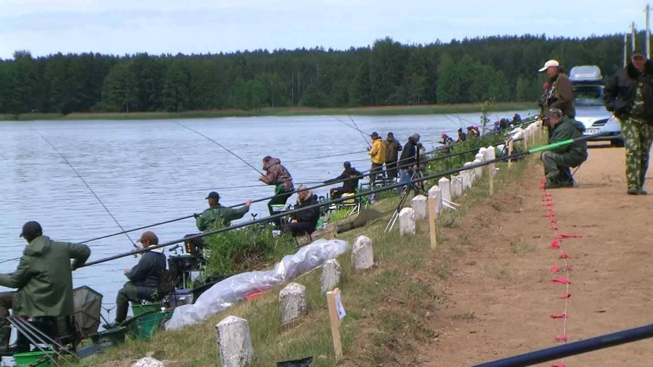 Прогноз клёва рыбы в городе могилёв - рыба