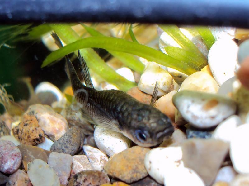 Что делать, если в аквариуме умирают рыбки. от чего умирают рыбки в аквариуме и что можно сделать в новом аквариуме дохнут рыбы - человек и здоровье