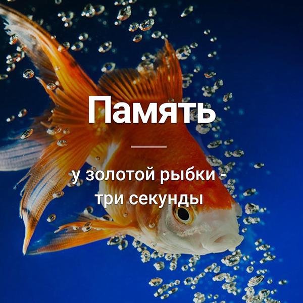 Сколько секунд длится память у рыб: мифы о домашних рыбках. какая память у рыб? эксперементы и различия в видах